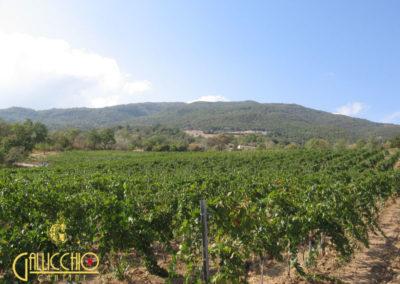 Wijnen van Cantine Gallicchio